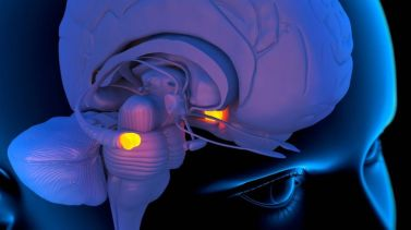 _93357606_c0036850-amygdala_in_the_brain_artwork-spl